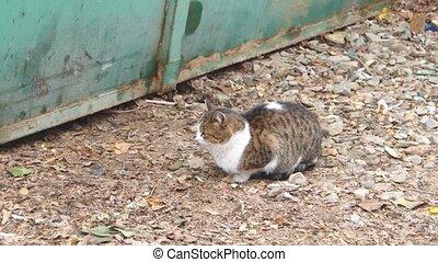 Cat sitting on gravel near metal fence - Cat sitting on...