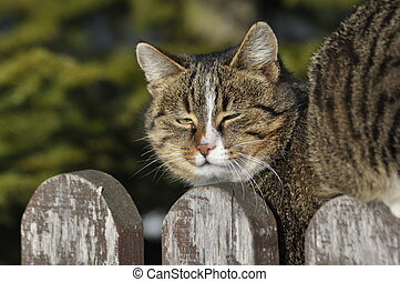 Cat sitting on the fence. Hunting for the mouse and rest