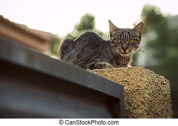 Cat sitting on the fence