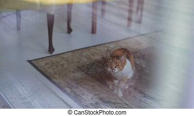 Cat sitting on the floor near the window