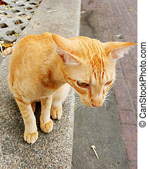 Cat sitting on the ground