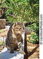 Cat sitting under a palm tree in the garden.