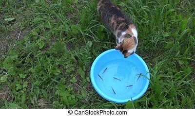 cat skill fishing