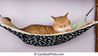Cat sleep in a fur hammock - Happy ginger cat sleep in a fur...