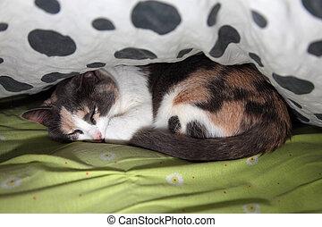 Cat sleeping between the blankets
