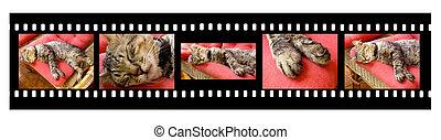 Cat Sleeping - Filmstrip