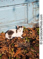 cat sleeping in autumn fallen leaves
