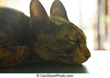cat sleeping in the afternoon on table