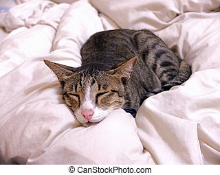 Cat sleeping on bed cover