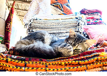 cat sleeping on carpets, photo as background