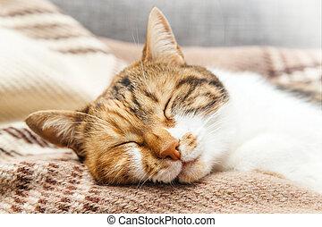 Cat sleeping on cozy warm blanket