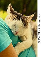 cat sleeping on human body breast close up