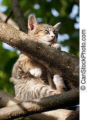 Cat sleeping on the tree
