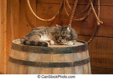 cat sleeping on wooden wine barrel