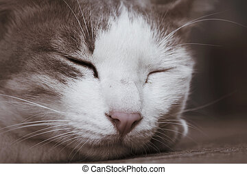 Cat sleeping