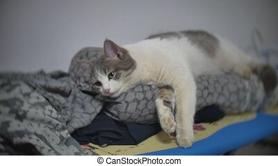 cat sleeps relaxed pet on the ironing board indoors slow motion video lifestyle