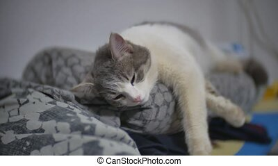cat sleeps relaxed pet on the ironing board slow motion video indoors lifestyle
