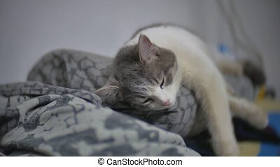 cat sleeps relaxed pet on the ironing board slow motion...