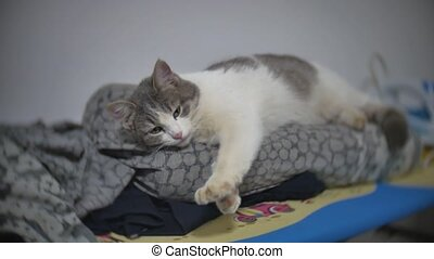 cat sleeps yawning relaxed pet on the ironing board slow...