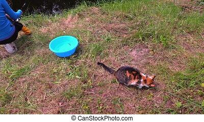 cat slote fish woman