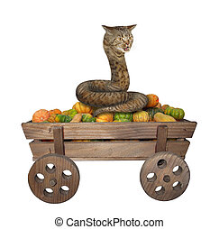 Cat snake on wooden cart 2