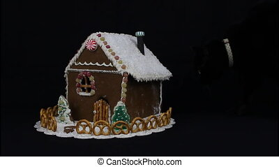 Black cat curiously sniffing home made gingerbread house, on black background