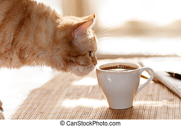 cat sniffs mug of coffee