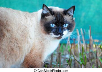 cat snow shu on the grass