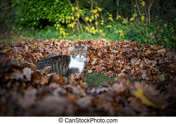 cat standing in a pile of raked leaves