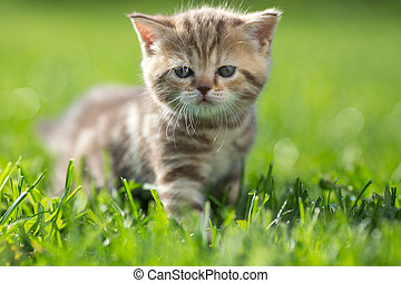 Cat standing in green grass