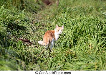 Cat standing in green grass