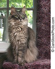 Cat Standing Tall