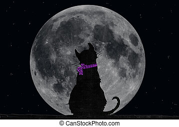 cat staring at the moon - Lonely cat staring at the full...