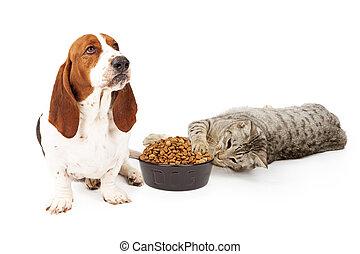 Cat Stealing Dog Food - An upset Basset Hound dog sitting...