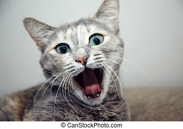 Cat - Portraif of the young cat with open mouth. Shallow...