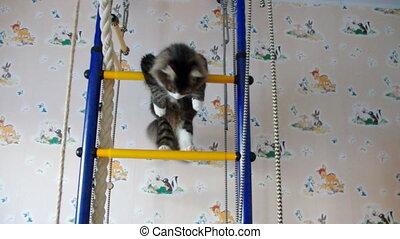 cat  gymnast