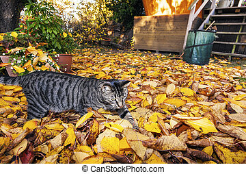 cat strolling around in the garden with foliage