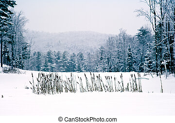 cat tails in snow