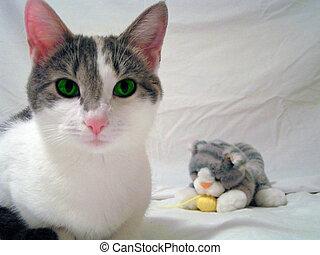 Cat Teddy 2