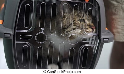 Cat. The cat is sitting in a transport cage.