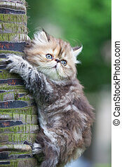 cat - the kitten play at the outdoor.