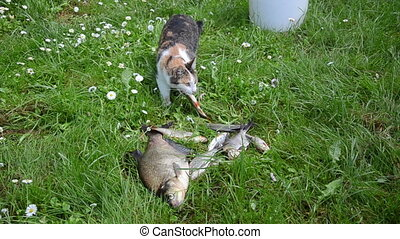 cat thief fish - Thief cat pet steal borrow roach fish and...