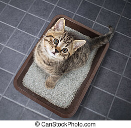 Cat top view sitting in litter box with sand on tile floor