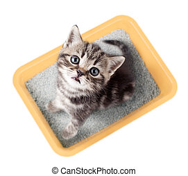 Cat top view sitting in yellow litter box isolated