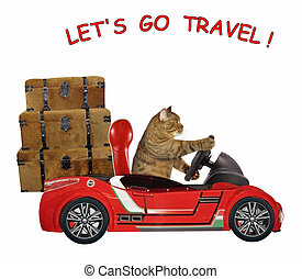Cat travels by car