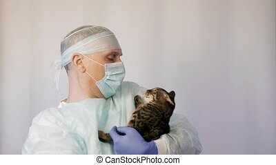 Veterinarian makes inspection of a kitten. He is going to vaccinate him