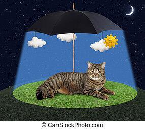 Cat under a umbrella