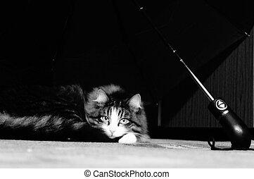 Cat under an umbrella