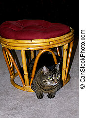 A gray tabby cat resting under a footstool.