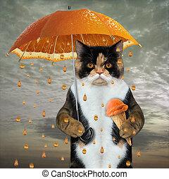 Cat under orange umbrella